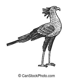 Secretary bird animal sketch engraving vector illustration. T-shirt apparel print design. Scratch board style imitation. Hand drawn image.