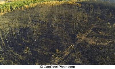 secteur, aérien, arbre, pin, peuplier, forêt, brûlé, vue