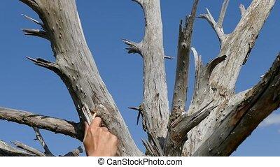 secteur arbre, sec, une, aride