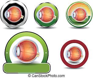section., ögon, kollektion, kors, symboler, oftalmologi, mänsklig