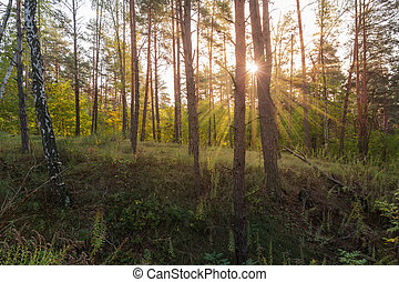 Section of deciduous and coniferous autumn forest backlit by sunlight