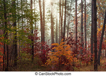 Section of mixed forest in sunny autumn morning