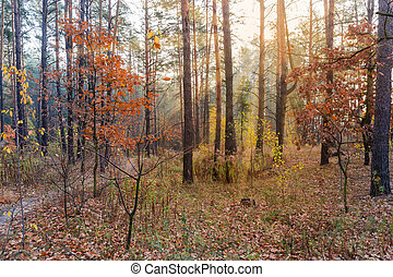 Section of the autumn deciduous and coniferous forest backlit
