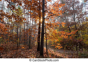 Section of the forest backlit at autumn morning