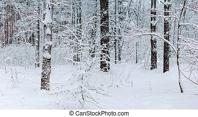 Section of the winter forest after snowfall