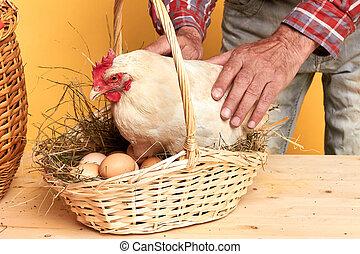 section, vue, conjugal, milieu, toucher, mûrir, paysan, poule, mâle, soin