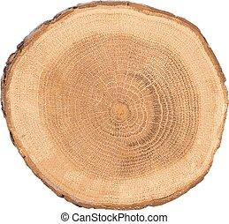 sectionnel, arbre, vue