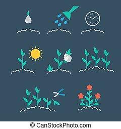 secuencia, de, crecer, un, planta