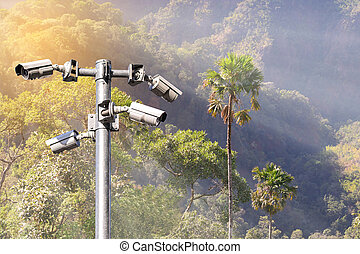 Security camera CCTV for monitoring and protection forest.