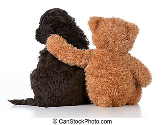 security - teddy bear with arm around a cute barbet puppy on...