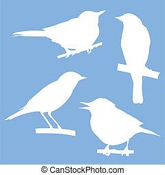 sedění, strom, silhouettes, vektor, filiálka, ptáci