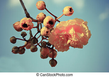 seda, algodão, flores