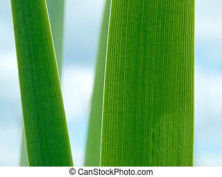 Sedge - Close view of sedge leaves