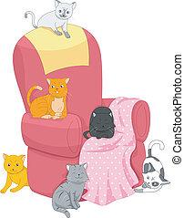 sedia, gatti