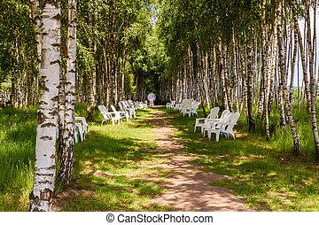sedie, spazio sosta, forest., betulla