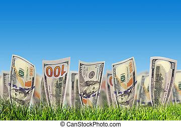 sedlar, grass., pengar, växande, dollar, en, grön, hundra