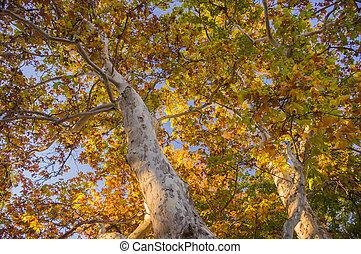 sedona, día, follaje, otoño