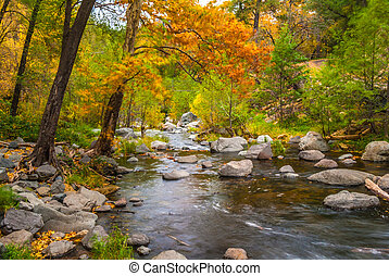 A gentle stream beneath color changing leaves