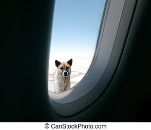 See a dog in the clouds and the sky through the window of...