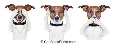 See no evil, hear no evil, speak no evil dog