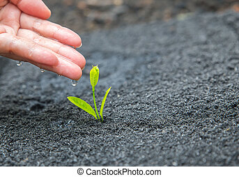 seed and planting concept with Male hand watering young tree over green background