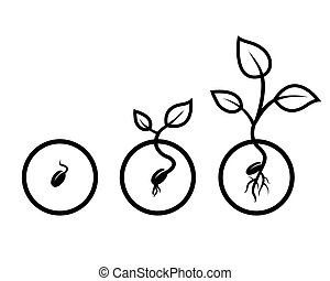 seed - vector drawing black seeds of growth on a white...