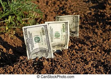 Seed Money - seeds, money, dirt, grow, growing, growth,...