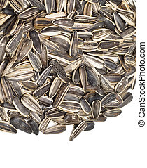 seed of sunflower - Close-up view of sunflower seeds