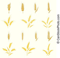 seed., oreilles, blé