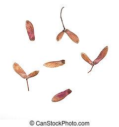 Seed Wings
