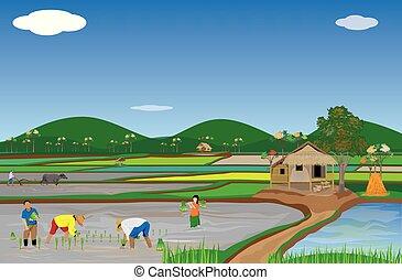 seedign, rizière, paysan, riz, transplantation