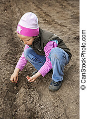 Seeding - Little girl planting seeds of cucumber in the ...