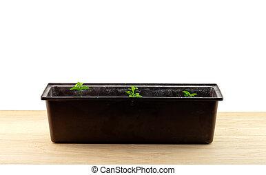 plant row in pot