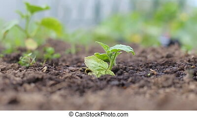 Seeding,Seedling,woman hand watering young plant over green background