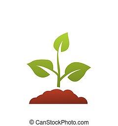 seedling, árvore, vetorial, crescendo, verde, agricultura, ícone