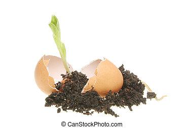 Seedling and soil in an egg