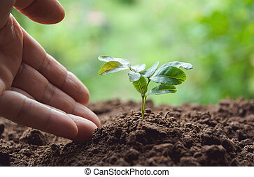 Seedling concept by human hand with young tree on nature background.