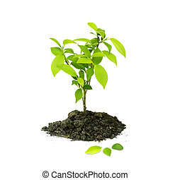 Seedling green plant on a white background, Depending on the...