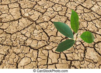 seedling growing from barren land