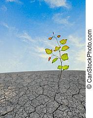 seedling growing from barren land