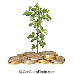 Seedling growing from coins