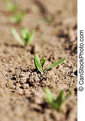 seedling in a field