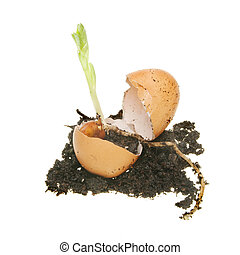 New life in the form of a plant seedling emerges from an egg and earth