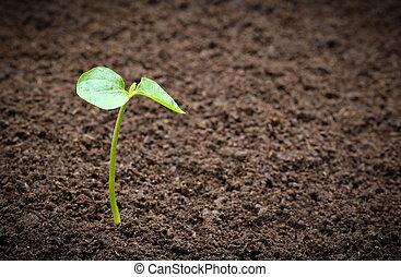 Seedling in fertile soil