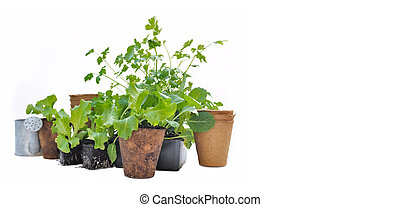 seedling in peat pot and others pot on white background