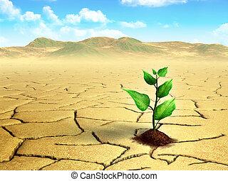 Seedling in the desert - Seedling growing on cracked, dry...