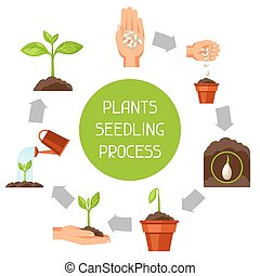 Seedling infographics with phases of plant growth. Image for...