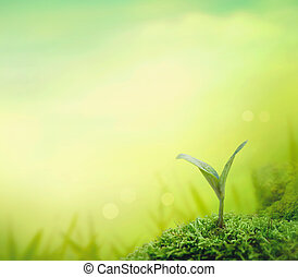 nature background. Spring grass. Blur background with spring or summer landscape. Summer meadow
