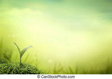 seedling - nature background. Spring grass. Blur background...