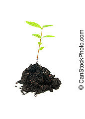 Seedling on white background